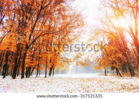 Sunlight breaks through the autumn leaves of the trees in the early days of winter