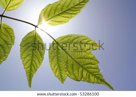 sunlight breaks through the green leaves