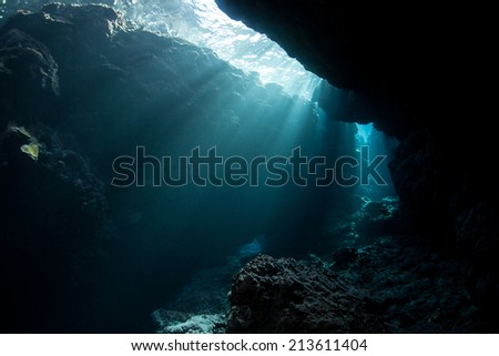 Sunlight cascades into the shadows of an underwater cavern in the Solomon Islands. Many coral reefs have caves and caverns where organisms that prefer darkness lives.