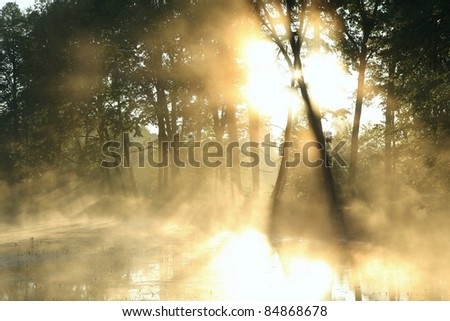 Sunlight enters misty deciduous forest before the arrival of autumn.