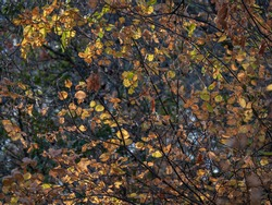 Sunlight filted through fall colored foilaige in forest