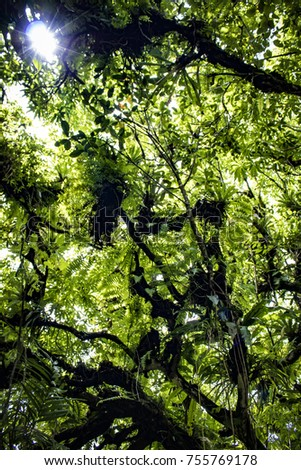 Sunlight Filtering through Ferns and Palm Trees in the Lush Rainforest of Mombacho Volcano, Nicaragua #755769178