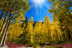 Sunlight Golden Fall Trees and Bloomed Flowers with Blue Sky