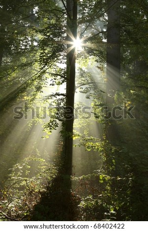 Sunlight illuminates the trees in the forest on a foggy autumn morning.