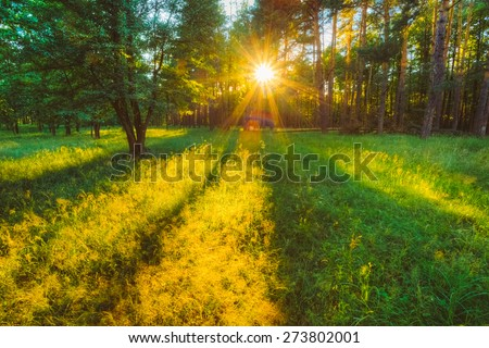Sunlight In Forest, Summer Nature. Sunny Trees And Green Grass. Woods Background