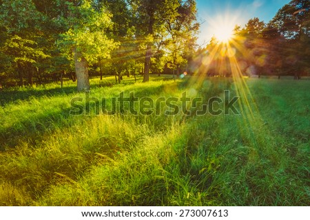 Sunlight In Green Coniferous Forest, Summer Nature