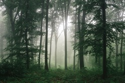 sunlight in green forest, natural woods landscape