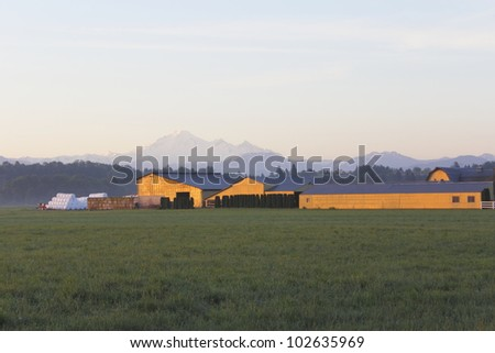 Sunlight in the early morning illuminates a farmyard/Early morning Farm Yard/Early morning in British Columbia's Fraser Valley