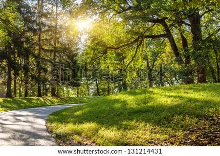 Sunlight in the green forest early morning. Dendro park Uman, Ukraine, Europe. Beauty world