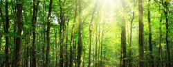 Sunlight in the green forest. Summer background.