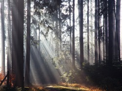 Sunlight is breaking through the trees in the forest and letting the light shine in magical sun beams