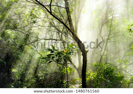 sunlight is through the forest #1480761560