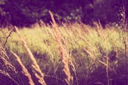 Sunlight on grass, lomography, Woodland, UK