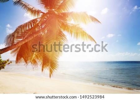 Sunlight Over The Palm Tree Near The Idyllic Sea #1492523984