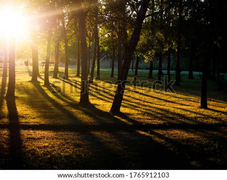 Sunlight pouring into the summer forest creating a mystical ambiance