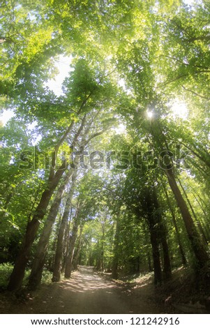Sunlight rays pour through leaves in a woods