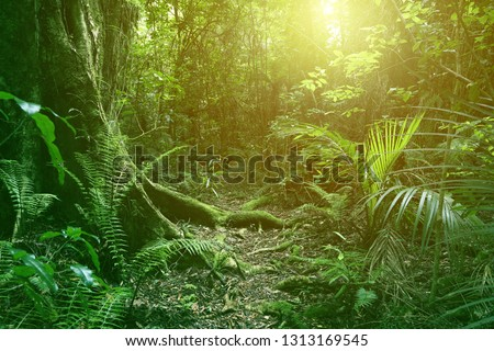 Sunlight shining in tropical jungle #1313169545