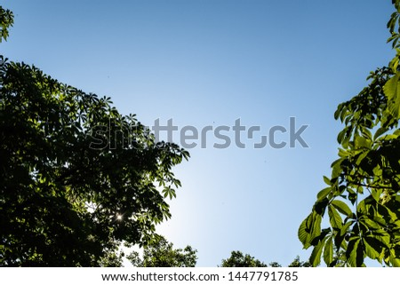 Sunlight shining over green leaves on a forest under a solid blue sky #1447791785
