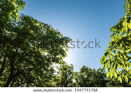 Sunlight shining over green leaves on a forest under a solid blue sky #1447791788