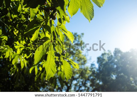 Sunlight shining over green leaves on a forest under a solid blue sky #1447791791