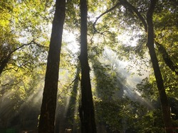 Sunlight shining through woods and jungle. Green forrest. Ray of lights. Nature.