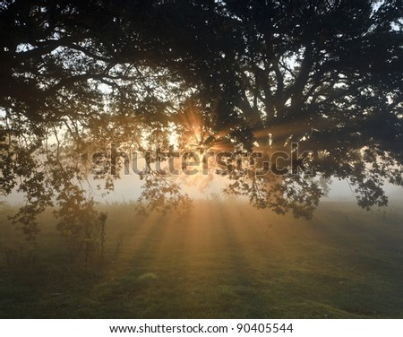 Sunlight streaming through the trees on a misty Autumn morning