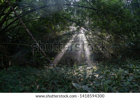 sunlight sunlight penetrates trees in the forest #1418594300