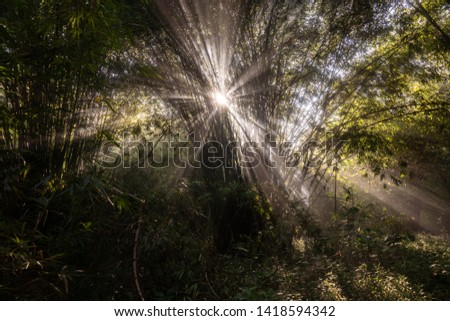sunlight sunlight penetrates trees in the forest #1418594342