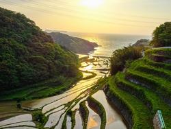 Sunlight Terraced Paddy Fields in Japan