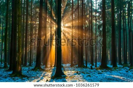Sunlight through dark winter forest trees landscape #1036261579