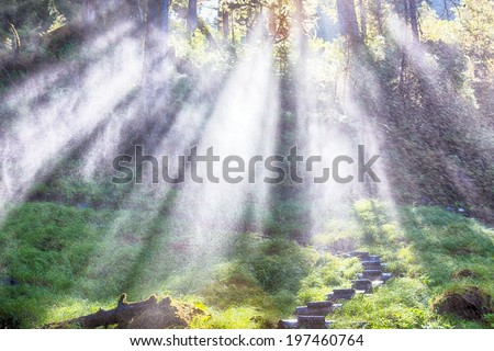 Sunlight through Misty Alaska Rain forest
