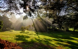 Sunlight through the crowns of trees. Forest meadow sunbeams. Sunbeams forest landscape. Sunbeams in forest meadow