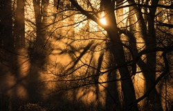 Sunlight through the crowns of trees in the forest. Forest sunbeams. Sunset shadows sunlight. Sunbeam forest scene