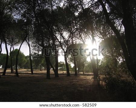 Sunlight through the trees #582509