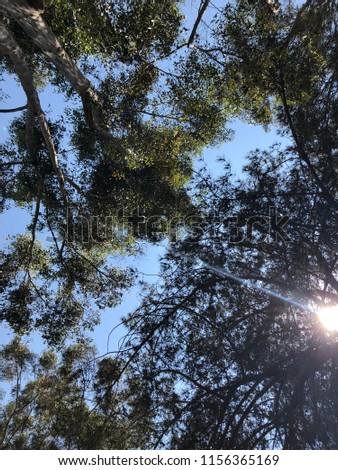 Sunlight through the Tress #1156365169
