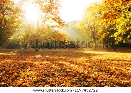 Sunlight through Trees City Park Berlin, autumn forest #1199432722