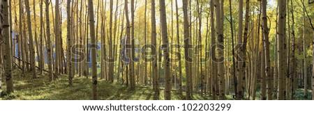 Sunlight through trees, Colorado