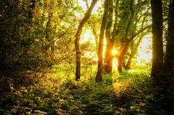 Sunlight with lens flare breaking through branches of trees in Epping Forest, London, United Kingdom.