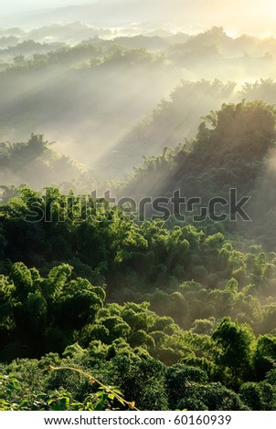Sunlight with mist in forest, nature scenery with peace in Taiwan.