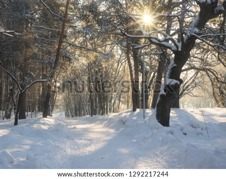Sunlit alley in winter park at the morning. Trees covered with fresh snow