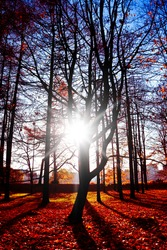 Sunlit Foliage Deep in a Park
