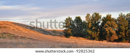 Sunlit hillside in the late afternoon near the town of San Jacinto, California.