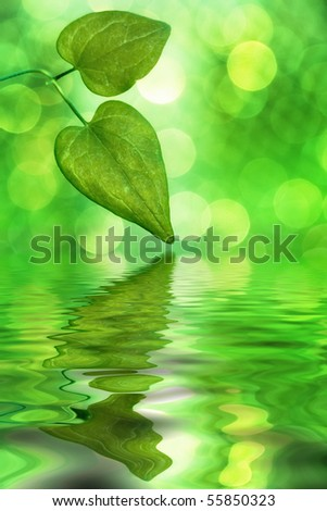 Sunlit leaves reflecting in water with blurred background