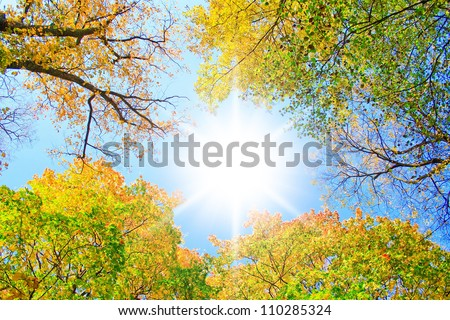 Sunlit Park Yellow Trees