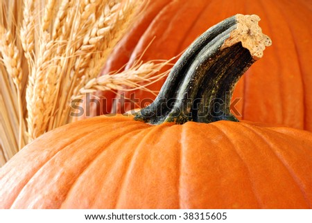 Sunlit pumpkins with spikes of wheat. Macro with shallow dof.  Selective focus on stem. - stock photo