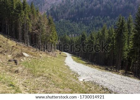 Sunlit stone path through the woods in the beskydy mountains bily kriz in czech republic Stok fotoğraf ©