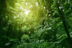 Sunlit tree canopy in tropical jungle