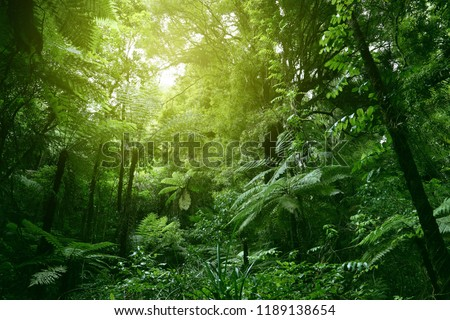Sunlit tree canopy in tropical jungle  #1189138654