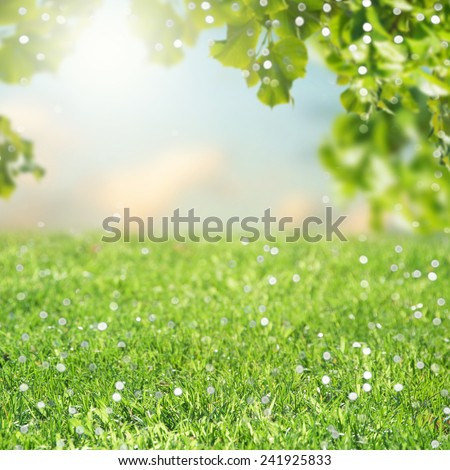 Sunny abstract green nature background - Shutterstock ID 241925833