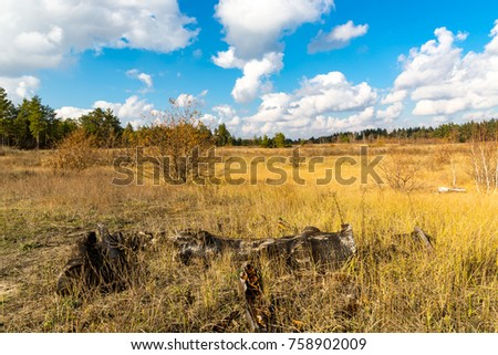 Sunny autumn day on meadow in forest #758902009
